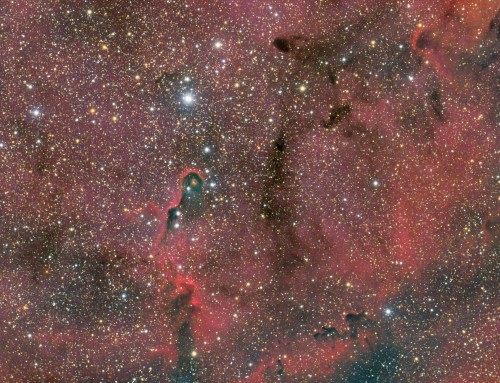 IC1396 and the Elephant Trunk Nebula